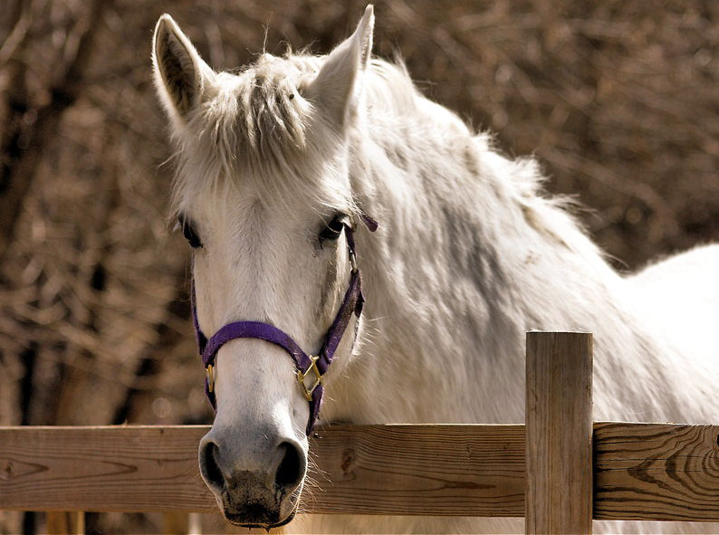 horse riding dullstroom