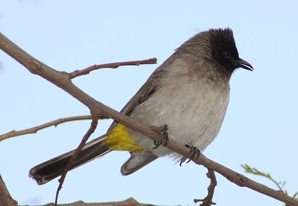 Things to do in Dullstroom birding
