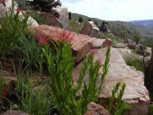 wild flowers 121